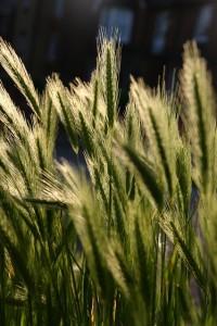 grass-650239_640